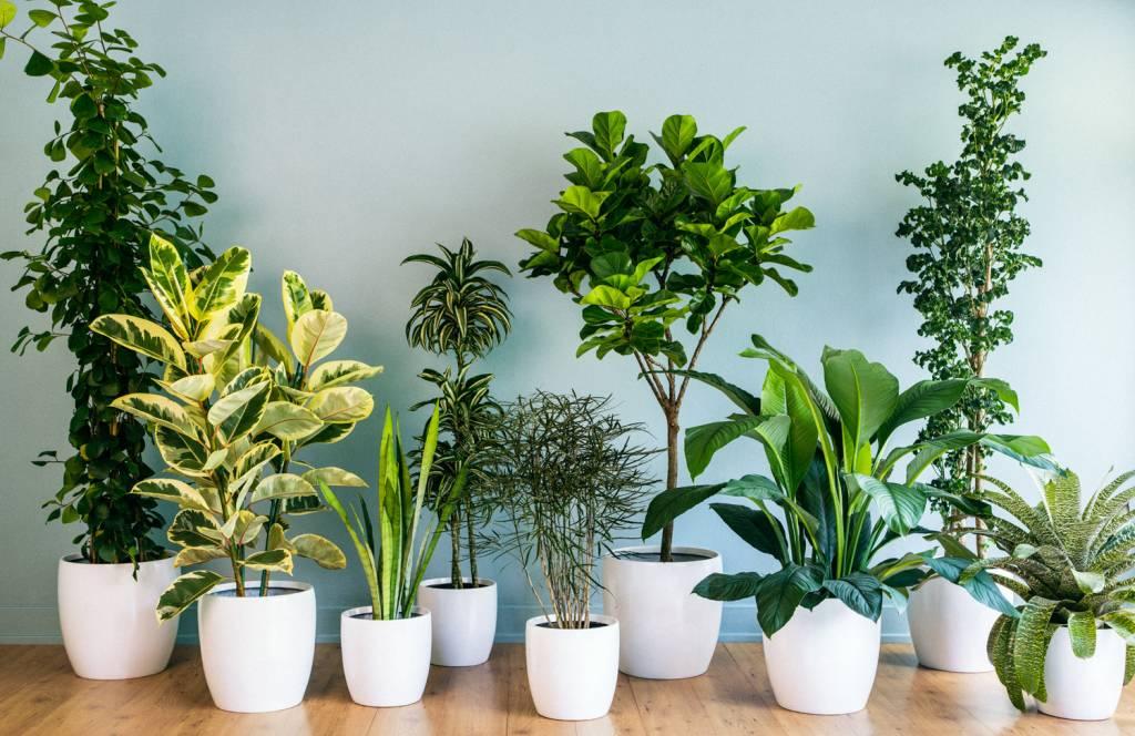 zimmerpflanzen richtig d ngen wie. Black Bedroom Furniture Sets. Home Design Ideas