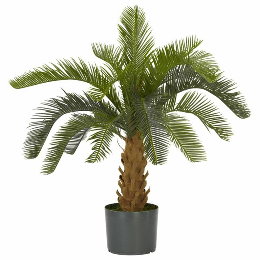 Beliebte exotische zimmerpflanzen wie for Exotische zimmerpflanzen