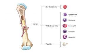 Stammzellen-Spenden