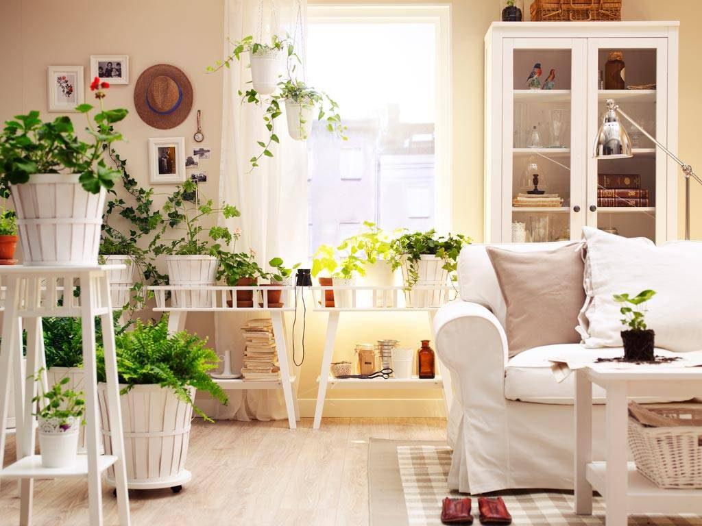 Tipps Und Tricks Für Schöne Zimmerpflanzen Wie Funktioniertcom