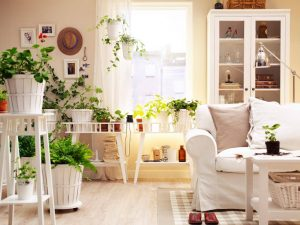 schöne Zimmerpflanzen